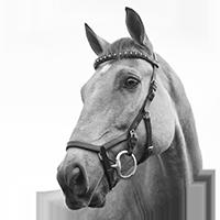 Produits chevaux